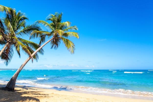 Palmbomen op het wilde tropische strand in de dominicaanse republiek. vakantie reizen achtergrond.