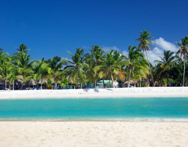 Palmbomen op tropisch strand