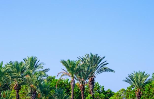 Palmbomen op tropische kust