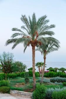 Palmbomen op voor zonsondergang tegen de achtergrond van de avondlucht en de zee. verticale foto