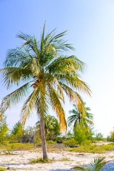 Palmbomen op wit zandstrand.