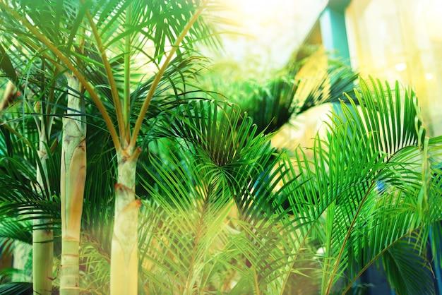 Palmbomen over hemel. zomer, vakantie en reizen concept met kopie ruimte. palmtakken met zonlichteffect.