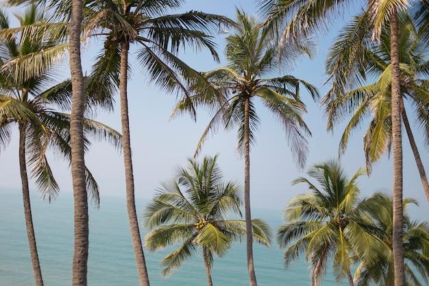 Palmbomen sappig groen tegen de blauwe lucht