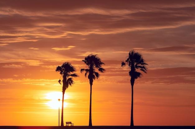 Palmbomen silhouet bij mooie heldere zonsondergang