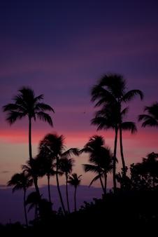 Palmbomen silhouet bij zonsondergang tropisch strand. oranje zonsondergang.
