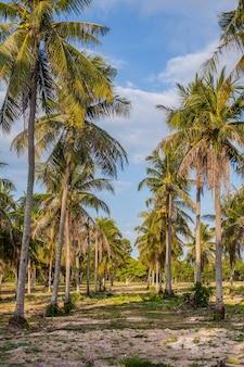 Palmbomen steegje