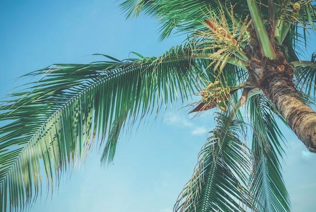 Palmbomen tegen blauwe hemel, palmbomen aan tropische kust, afgezwakt vintage.