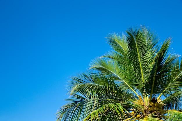 Palmbomen tegen blauwe hemel. palmbomen aan tropische kust