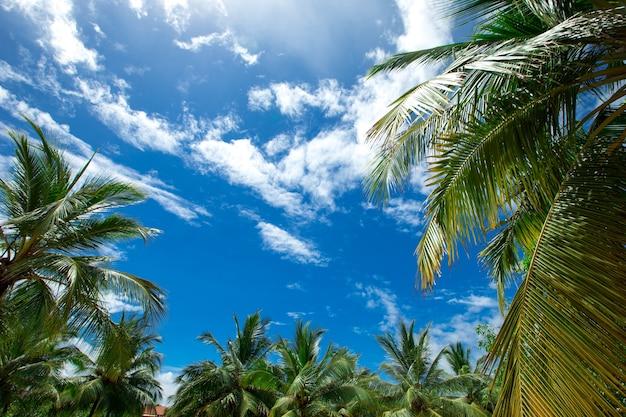 Palmbomen tegen blauwe hemel, palmbomen op tropische kust