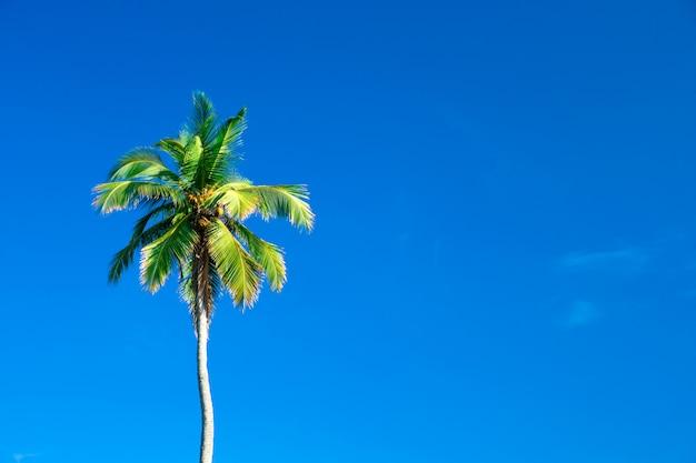 Palmbomen tegen blauwe hemel
