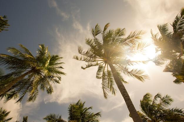 Palmbomen tegen blauwe lucht, palmbomen aan tropische kust tropical