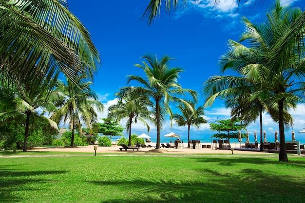 Palmbomen tegen blauwe lucht, palmbomen aan tropische kust