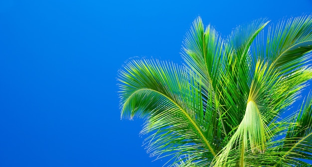 Palmbomen tegen blauwe lucht