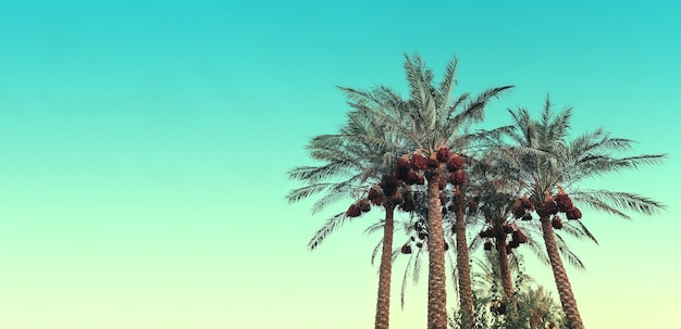 Palmbomen tegen de achtergrond van een blauwe hemel