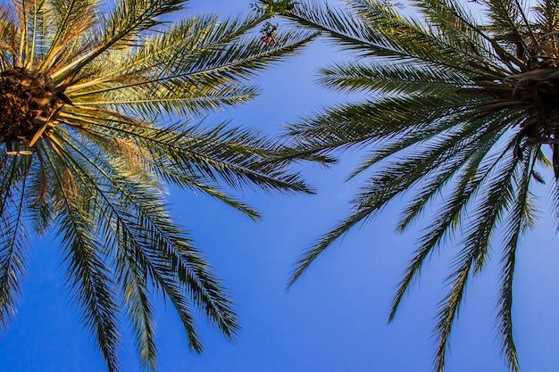 Palmbomen tegen de blauwe hemel. concept tropic, vakantie en reizen. onderaanzicht