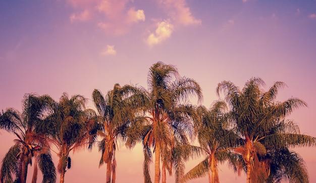 Palmbomen tegen de hemel bij zonsondergang