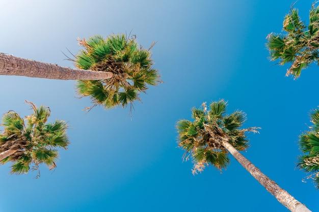 Palmbomen tegen een blauwe lucht