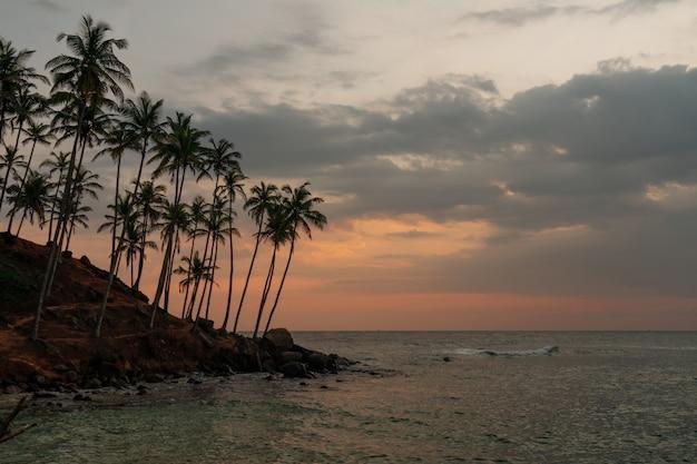 Palmbomen uitzicht op de oceaan, eiland zonsondergang hemel landschap