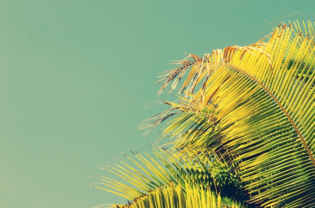 Palmbomen vintage