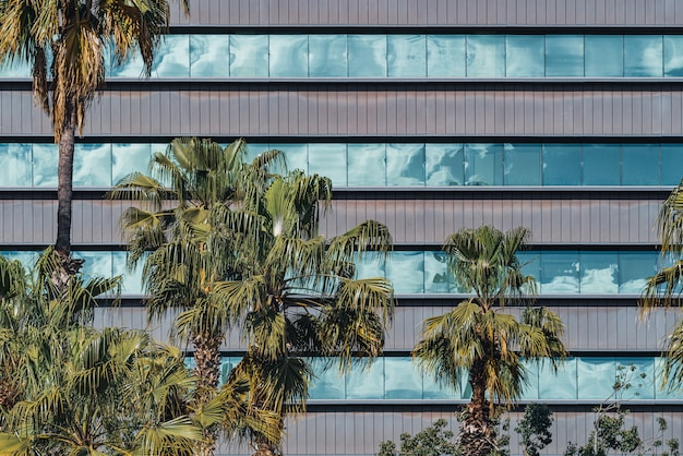 Palmbomen voor de glazen ramen van de gevel van een kantoorgebouw