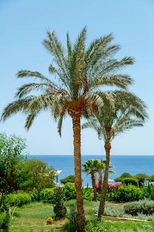 Palmbomen voor zonsondergang tegen de achtergrond van de zee.