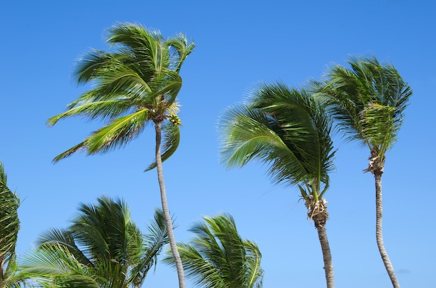 Palmboom aan de hemel