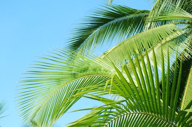 Palmboom blad met blauwe lucht op het strand voor zomer achtergrond