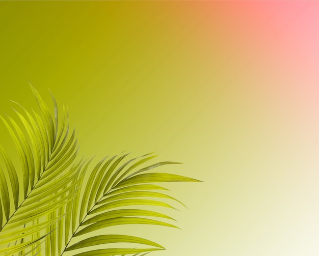Palmboom bladeren op blauwe achtergrond