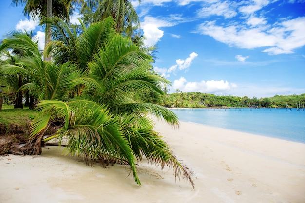 Palmboom en bladeren op het strand.