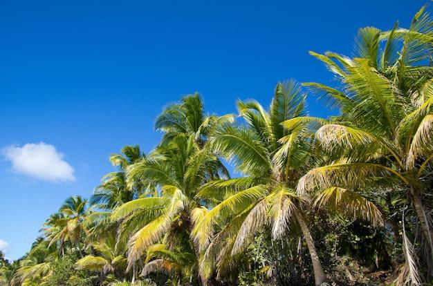 Palmboom en blauwe hemel