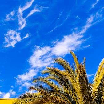 Palmboom en blauwe lucht. minimale tropische stijl