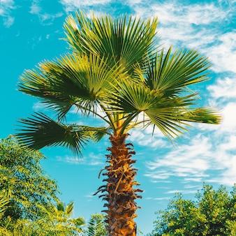 Palmboom en blauwe lucht. tropische locatie. minimale reiskunst