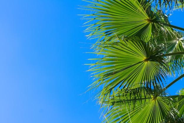 Palmboom groene bladeren op heldere blauwe hemelachtergrond