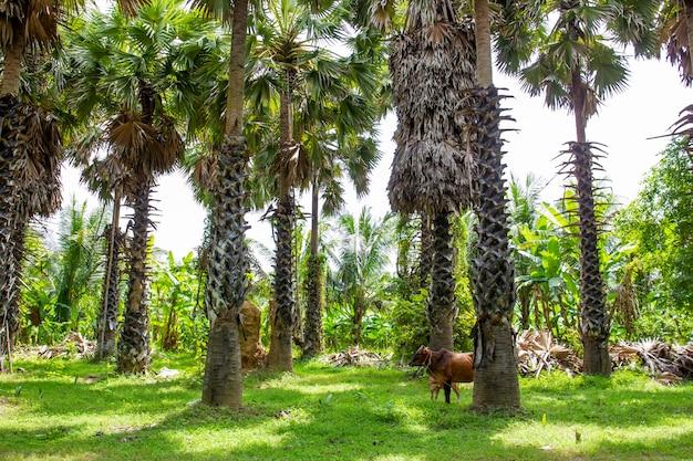 Palmboom groep
