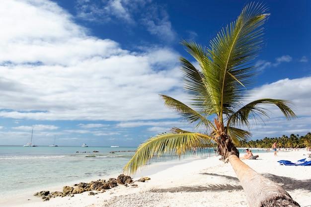 Palmboom in caraïbisch strand met wolken