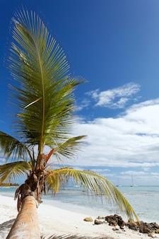 Palmboom in caraïbisch strand
