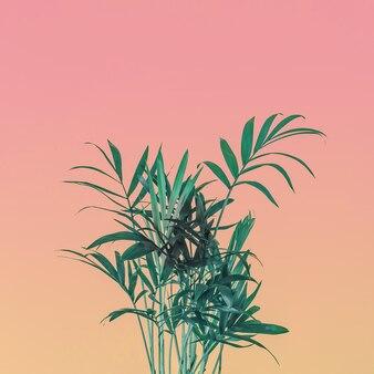 Palmboom laat op roze pastel hemel