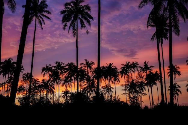 Palmboom met silhouet.