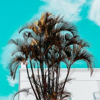 Palmboom minimale canarische eilanden