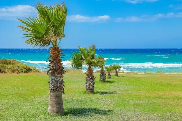 Palmboom op aard dichtbij het zeeoppervlak