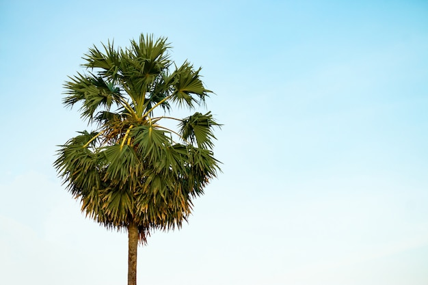 Palmboom op blauwe hemel