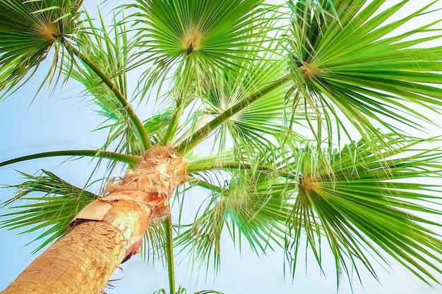 Palmboom op de natuur door de zee zwembad achtergrond