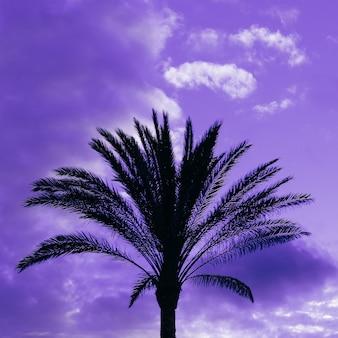 Palmboom op een paarse achtergrond. minimalistisch kunstontwerp