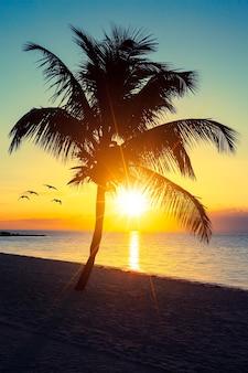 Palmboom op een strand bij zonsondergang