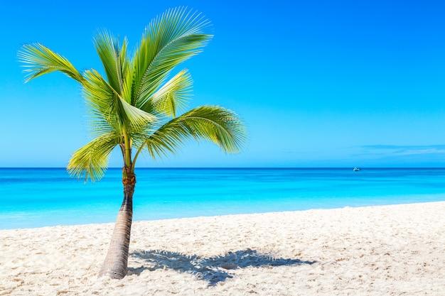 Palmboom op het caribische tropische strand