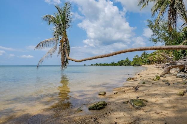 Palmboom op het strand, leunend op de zee onder het zonlicht en een blauwe lucht