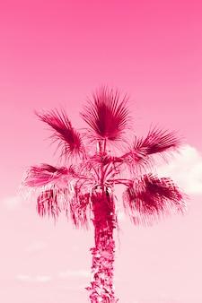 Palmboom op het strand. zomervakantie, reizen en tropisch strandconcept. afgezwakt effect