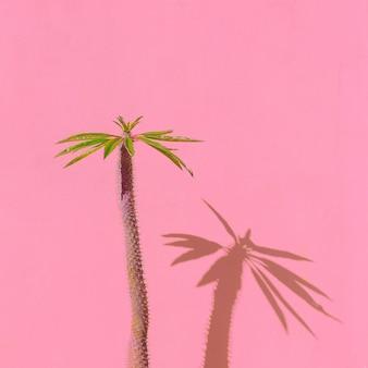 Palmboom op roze muur. tropisch minimaal. modeplanten op roze concept