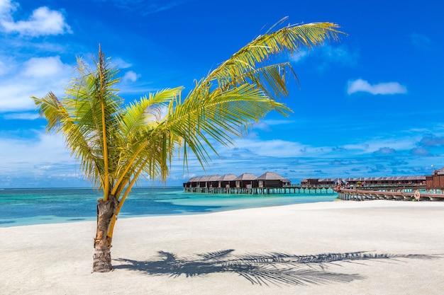 Palmboom op tropisch strand op de malediven