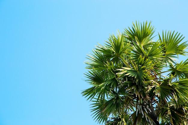 Palmboom over heldere blauwe hemel.